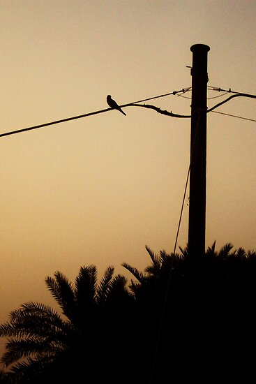 Bird on a wire by fluttering