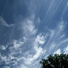 Wild Sky by Elizabeth Bennefeld