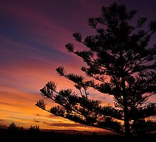 Sunset and Pine Tree by AngieB