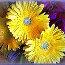 Chrysanthemums - Always delightful by EdsMum