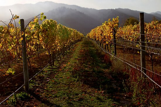 Autumn Vines by Robyn Carter