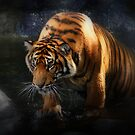 Shadows and Light (Tiger) by Kymie