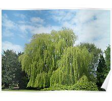 Spring 6 Poster