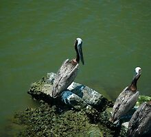 Pelicans below by Ann Reece