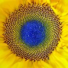 Flower of Sun by Cleber Design Photo