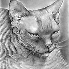 "Ebony (curly kitty)  -  ""Devon Rex"" by Lorraine  Stern"