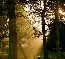 Misty Morning by eleveneleven