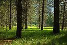 Zumwalt's Meadow by Zane Paxton