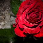 Gothic Rose by springwatcher