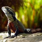 Lizard of Oz - Afternoon Sun by clydeessex