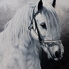 'Silver'-Gypsy Cob-Milltown Fair by Pauline Sharp