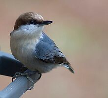 Brown Headed Nut Hatch by Regenia Brabham