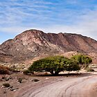 An amazing tree! Richtersveld Transnational Park, South Africa by Fineli