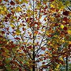 Autumn Arbre - Versailles, France by Britland Tracy