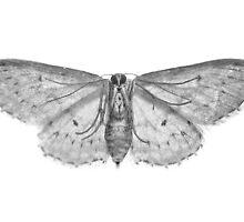 Moth... by MoGeoPhoto