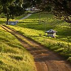 Beechmont Scene - Gold Coast Hinterland by John Quixley
