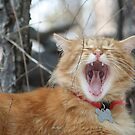 Open Wide and Say Ahhhhhhh by DebbieCHayes