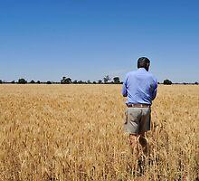 Is the wheat ready for harvest? by Margaret Whyte