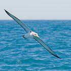 Albatross by Mark  Attwooll