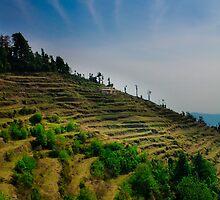 Mussoorie fields  by Dinni H