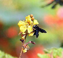 The humble Bee. by debjyotinayak