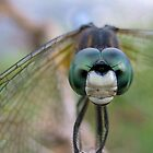 Dragonfly by venny