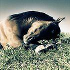 2.6.2010: Pony Dreams by Petri Volanen