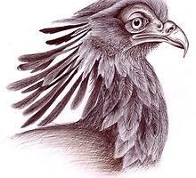 Secretary bird (Sagittarius serpentarius) by Liana Marnewick