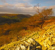 Hawnby Crag, Hawnby, North Yorkshire Moors by James Paul
