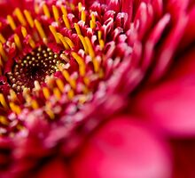 Pink by Lee Lambourne