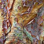 Paperbark Tree Abstract by Jessica Jenney