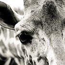 giraffe by Carina Potts
