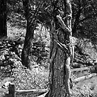 The Stump by Timothy L. Gernert