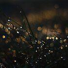 Fairy Eden by Avena Singh