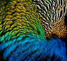 peacock tres by Lisa Skala