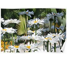 A Garden of White Daisy Flowers Poster