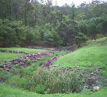 Gully of the Cane Toads by Beverley  Johnston