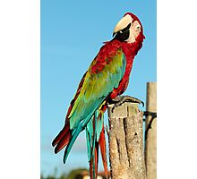 Red & Green Macaw Photographic Print