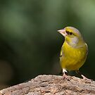 Greenfinch On da Log by Janika