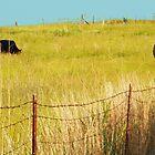 Knee Deep in Grass by Susan Blevins