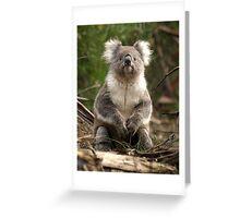 Koala posing - Otway Ranges, Victoria Greeting Card