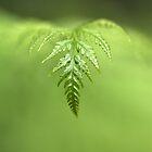 green wave by Iris Mackenzie