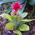 Pink Flower in my garden by Camelot