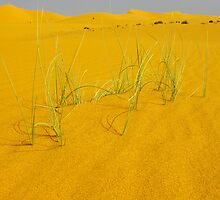Dunes grasses by Peter Doré