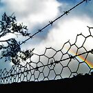 Barbwire Rainbow by Virginiad