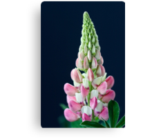 Lupin on Black Canvas Print