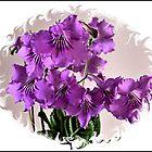 Framed flower by hary60