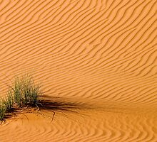 Desert Grass by Peter Doré