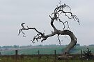 Tree 'n Bird by Georgie Hart