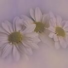 Pastel Daisies by Dianne English